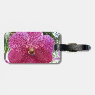 Etiqueta rosada del equipaje de Vanda