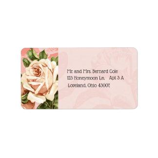 Etiqueta Se ruboriza la dirección botánica del rosa del