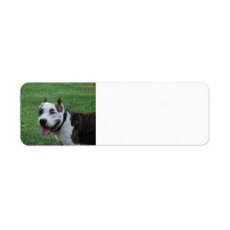 Etiqueta sonrisa americana del terrier de pitbull