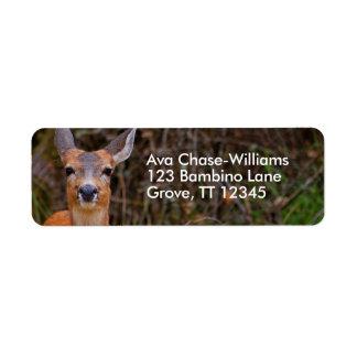 Etiqueta Sonrisas de cola negra jovenes de un ciervo