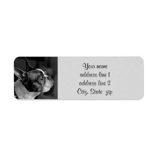 Etiqueta Terrier de Boston