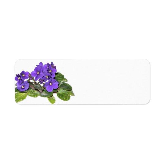 Etiqueta Violeta africana