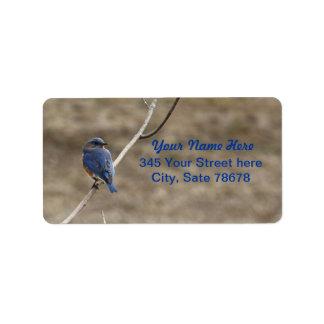 Etiquetas de dirección del Bluebird
