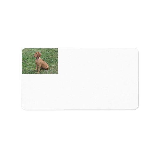 Etiquetas de dirección del perrito de Vizsla