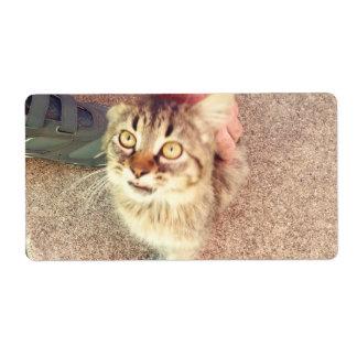 Etiquetas de envío con la imagen del gatito