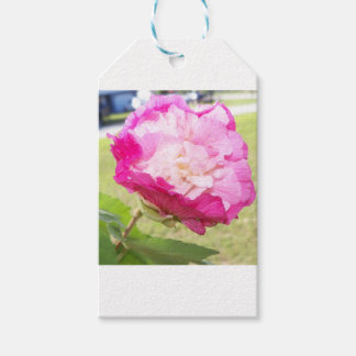 Etiquetas Para Regalos floración cambiable del rosa y blanca del hibisco