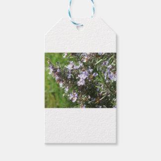 Etiquetas Para Regalos Planta de Rosemary con las flores en Toscana,