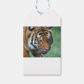 Etiquetas Para Regalos Primer del tigre del Malay de los alquileres