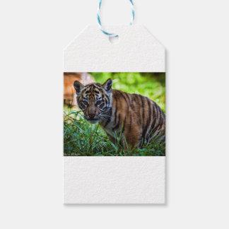 Etiquetas Para Regalos Tigre Cub de Sumatran de los alquileres