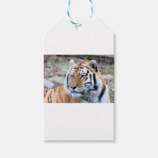 Etiquetas Para Regalos Tigre de Bengala real estoico de los alquileres