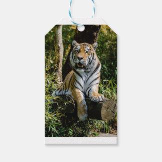 Etiquetas Para Regalos Tigre de los alquileres en Muenster