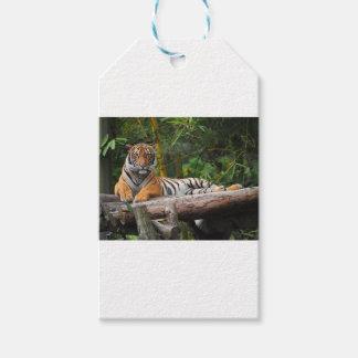 Etiquetas Para Regalos Tigre del Malay de los alquileres que gandulea en