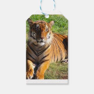 Etiquetas Para Regalos Tigre malayo de los alquileres