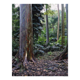 Eucalipto pintado de la corteza, Maui, Hawaii Folleto 21,6 X 28 Cm