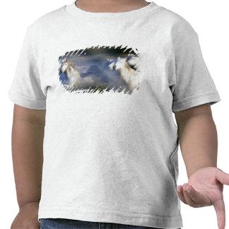 Europa, Francia, Ile del la Camargue. Camargue 6 Camiseta