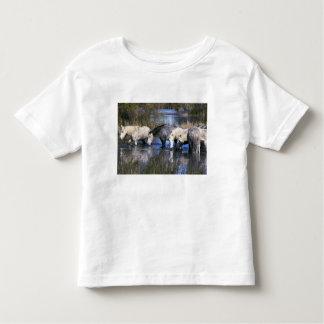 Europa, Francia, Ile del la Camargue. Camargue Camiseta De Bebé