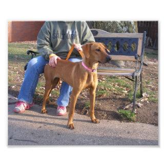 Exterior derecho del perro de caza marrón claro foto
