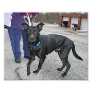 Exterior derecho del perro negro con una pata leva impresiones fotograficas