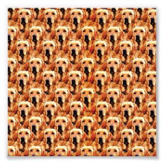 Extracto fresco del golden retriever del perrito impresiones fotográficas