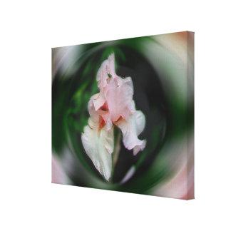 Extracto rosado de la flor del iris barbudo floral