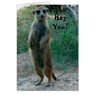 Ey usted tarjeta de cumpleaños de Meerkat