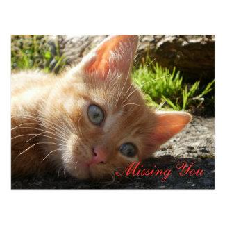 Falta de usted; Postal triste del gatito