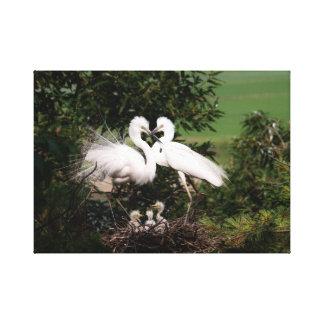 "Familia blanca del Egret 18,33"" x 13,00"" impresión"