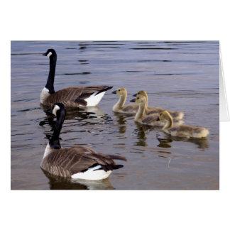 Familia canadiense del ganso tarjeta