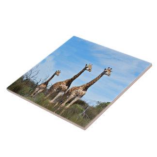 Familia de la jirafa azulejo cuadrado grande