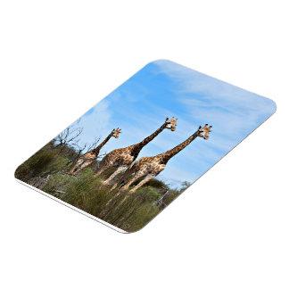 Familia de la jirafa imán flexible
