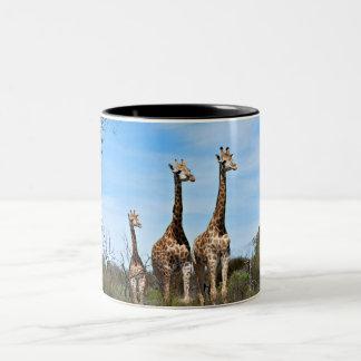 Familia de la jirafa taza de café de dos colores