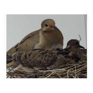 Familia de luto de la paloma tarjetas postales