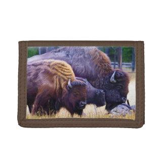 Familia del bisonte americano