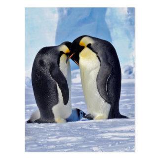 Familia del pingüino de emperador postal