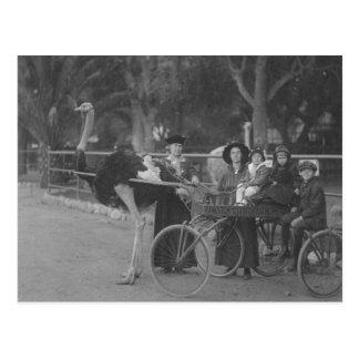 Familia del vintage en carro dibujado avestruz postal