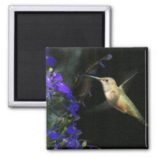 Fauna animal del pájaro del colibrí floral imanes