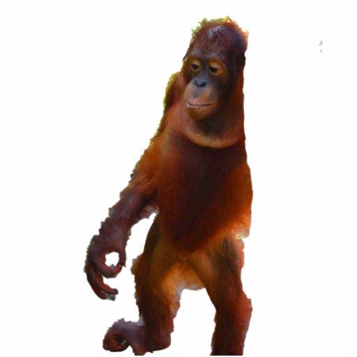 Fauna de la yoga de la selva tropical esculturas fotográficas