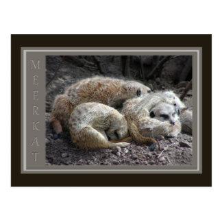 Fauna de Meerkat Postal