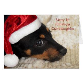 Feliz 1ra nieta del navidad del Dachshund Tarjeta De Felicitación