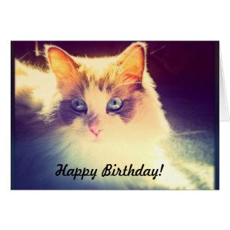 Feliz cumpleaños - aspecto del gato tarjeta de felicitación