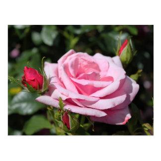 feliz cumpleaños de las flores color de rosa postal
