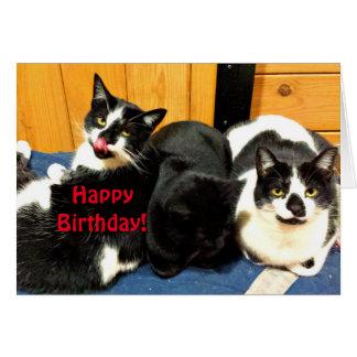 Feliz cumpleaños de su colección del gato - tarjeta de felicitación