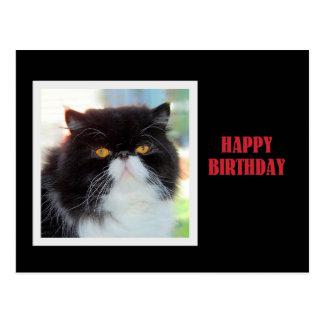 Feliz cumpleaños del gato persa tarjeta postal