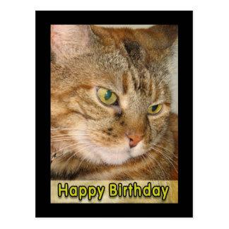 feliz cumpleaños del gato postal