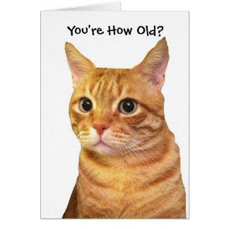 Feliz cumpleaños en años del gato tarjeta