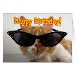 Feliz cumpleaños - gafas de sol que llevan del gat tarjetón
