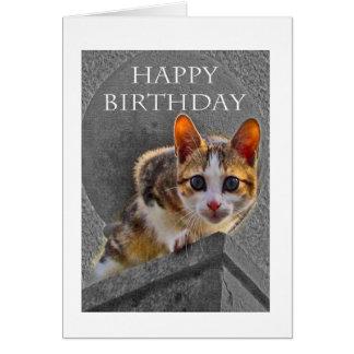Feliz cumpleaños, gato de la concha tarjeta de felicitación