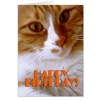 Feliz cumpleaños - gato dulce tarjeta de felicitación