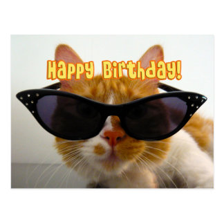 Feliz cumpleaños - gato fresco en postal de las ga