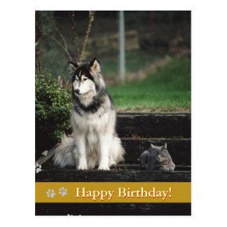 ¡Feliz cumpleaños! - postal del perro y del gato